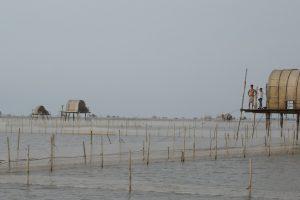 Coastal ecosystem