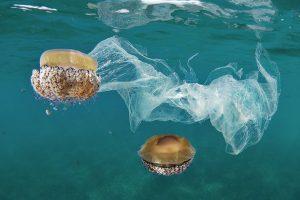 Lần đầu có bộ dữ liệu trong vòng 60 năm về rác thải nhựa đại dương