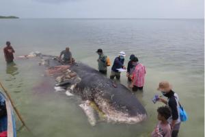 Found, Inside Dead Sperm Whale: 100 Plastic Cups, 4 Plastic Bottles, 25 Plastic Bags, 2 Flip-Flops