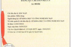 """Bảo hộ chỉ dẫn địa lý """"Bắc Kạn"""" cho sản phẩm miến dong tỉnh Bắc Kạn"""